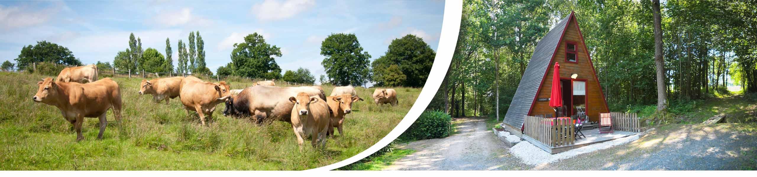 vente directe viande, ferme, lieu bellemare, gîte familial, vaches aubrac, Pays d'Auge, calvados, eure, cormeilles, lisieux, pont l'évêque, normandie